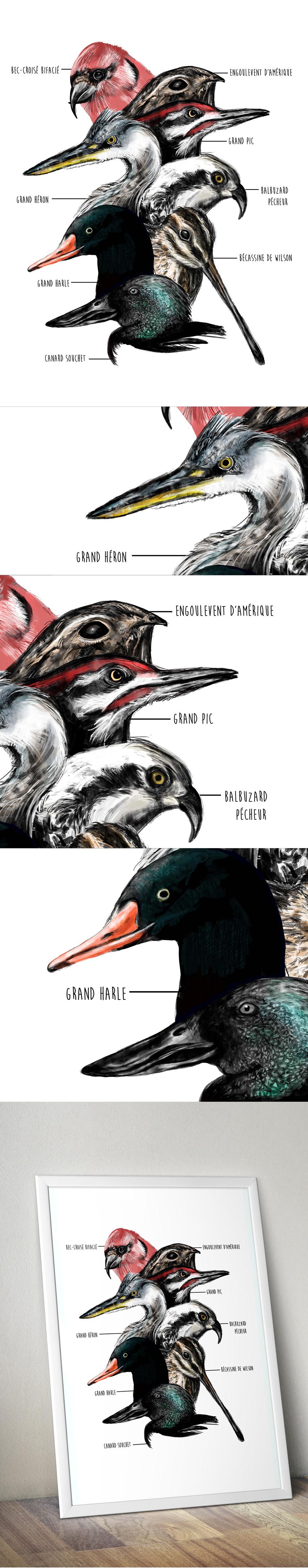 oiseaux_portfolio_2